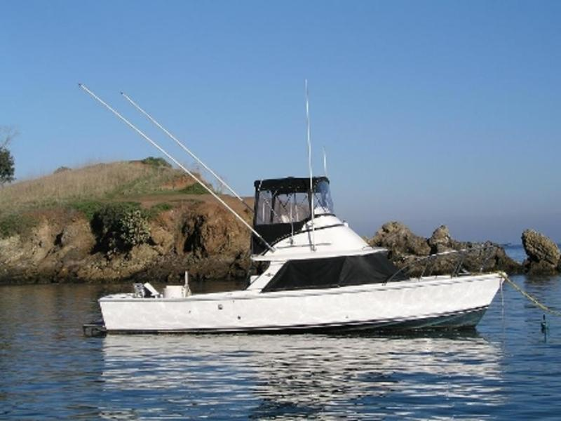 1972 Bertram 31 Special located in California for sale